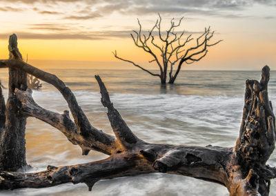 4343-tree-beach