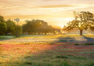 Poteet Sunrise
