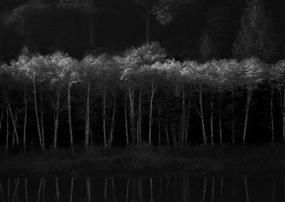 trees-b&w