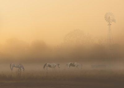 horse-fog-final