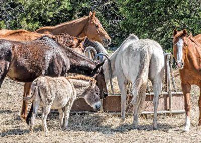 horses-web-product-2